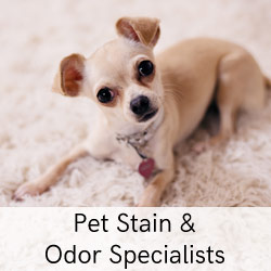 pet stain and odor specialists